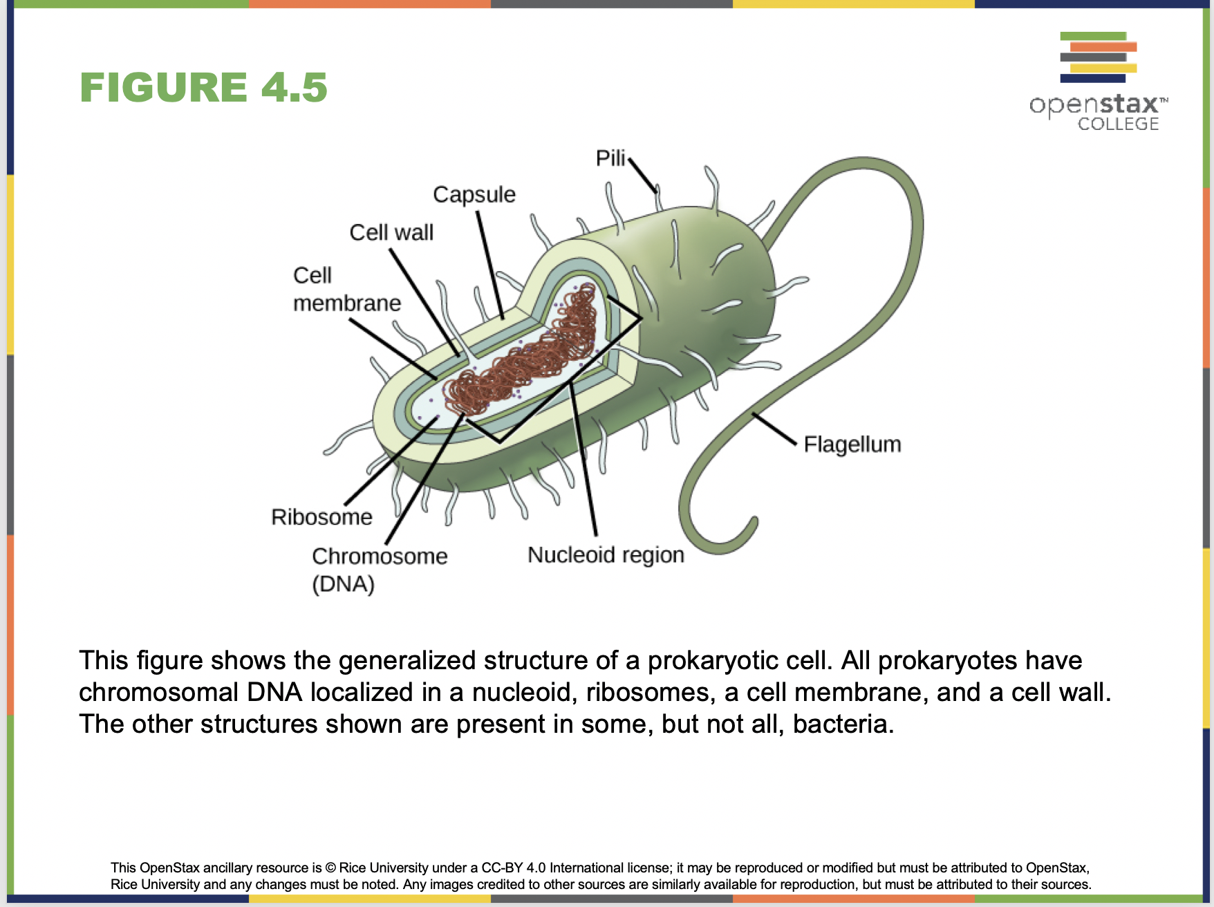 Cell Structure PowerPoint Sample Slide