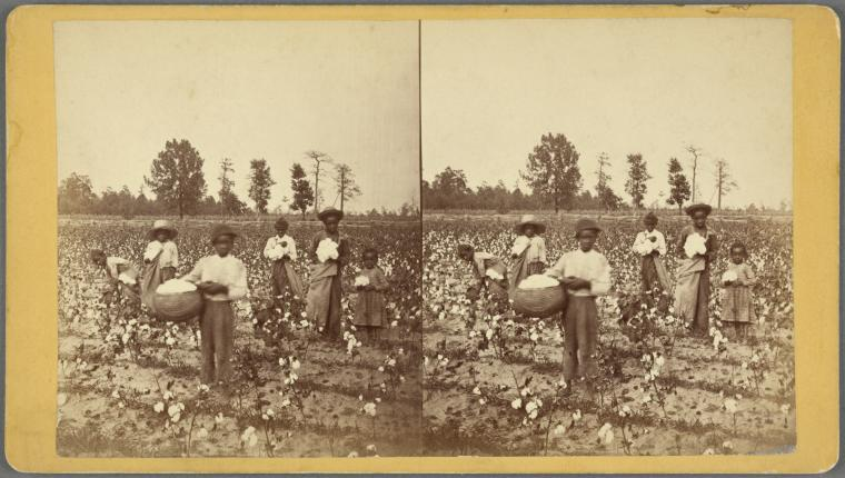 Workers posing in a cotton field