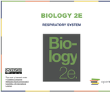 Biology II Course Content, The Respiratory System, The Respiratory System Resources