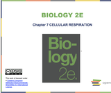 Biology II Course Content, Cellular Respiration, Cellular Respiration Resources