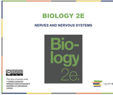 Biology I Course Content, The Nervous System, The Nervous System Resources